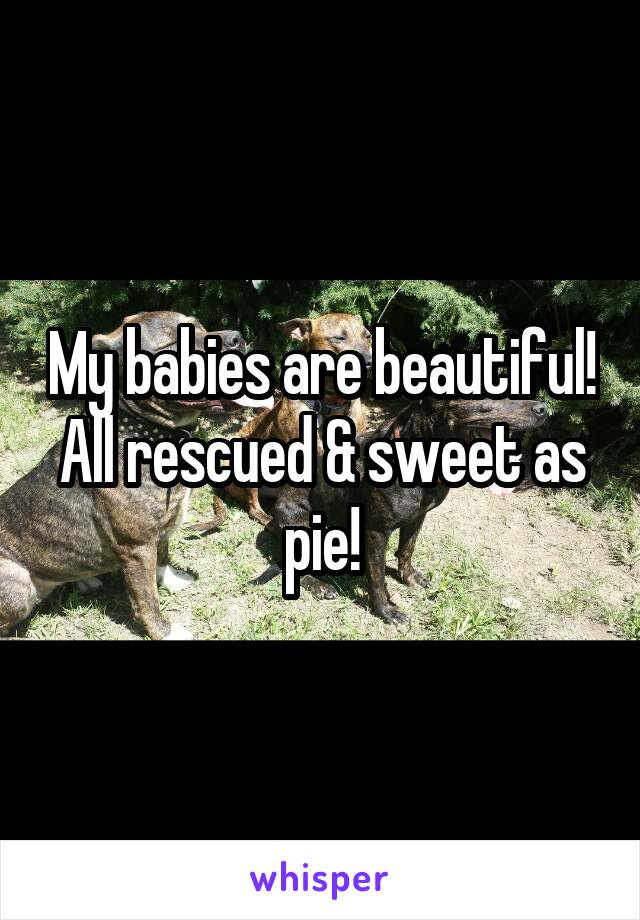 My babies are beautiful! All rescued & sweet as pie!
