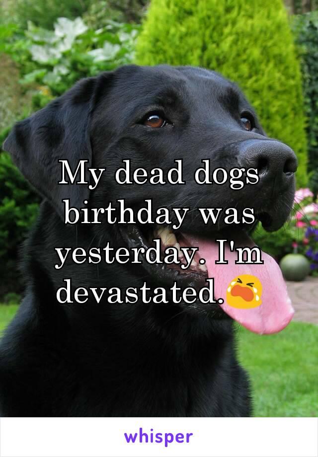 My dead dogs birthday was yesterday. I'm devastated.😭