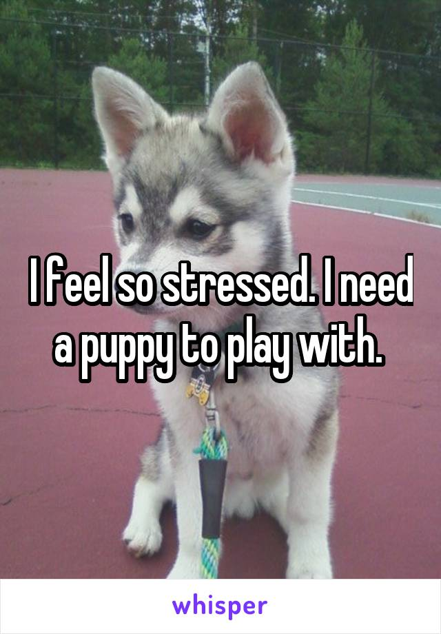 I feel so stressed. I need a puppy to play with.