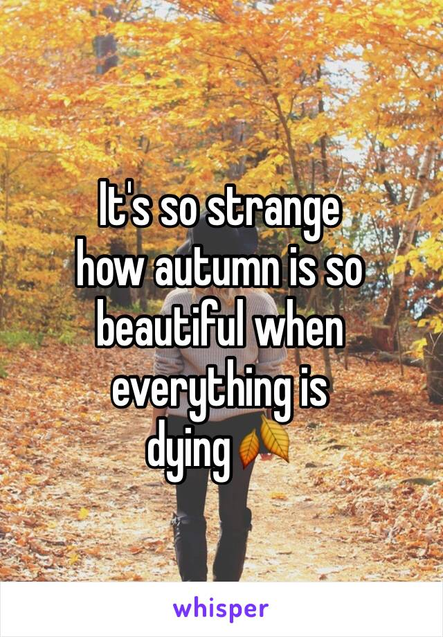 It's so strange  how autumn is so beautiful when everything is  dying🍂