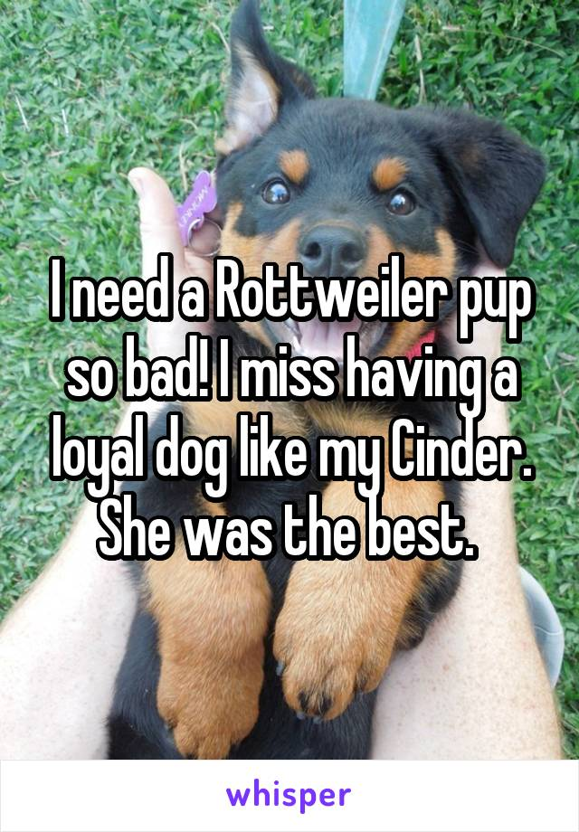 I need a Rottweiler pup so bad! I miss having a loyal dog like my Cinder. She was the best.