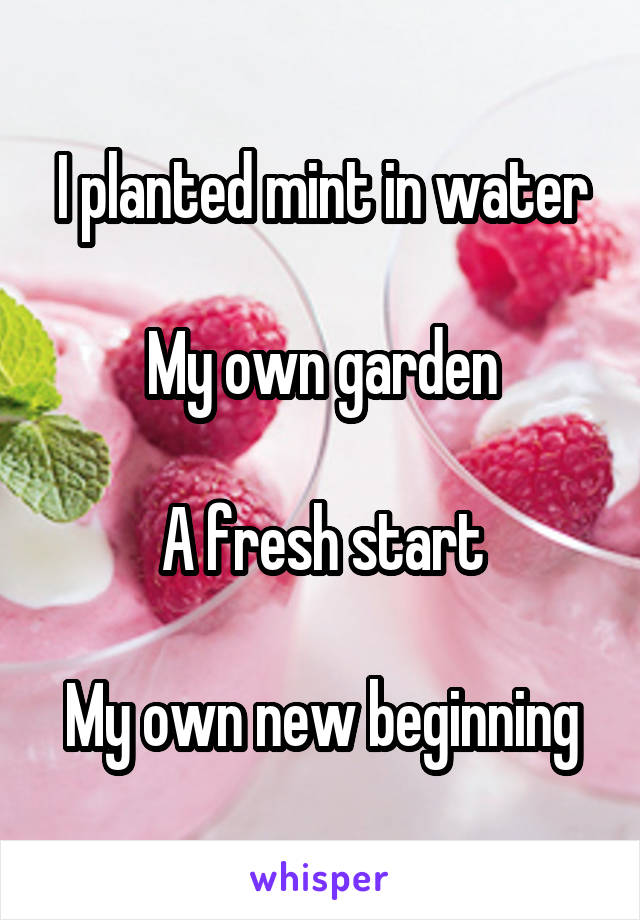 I planted mint in water  My own garden  A fresh start  My own new beginning