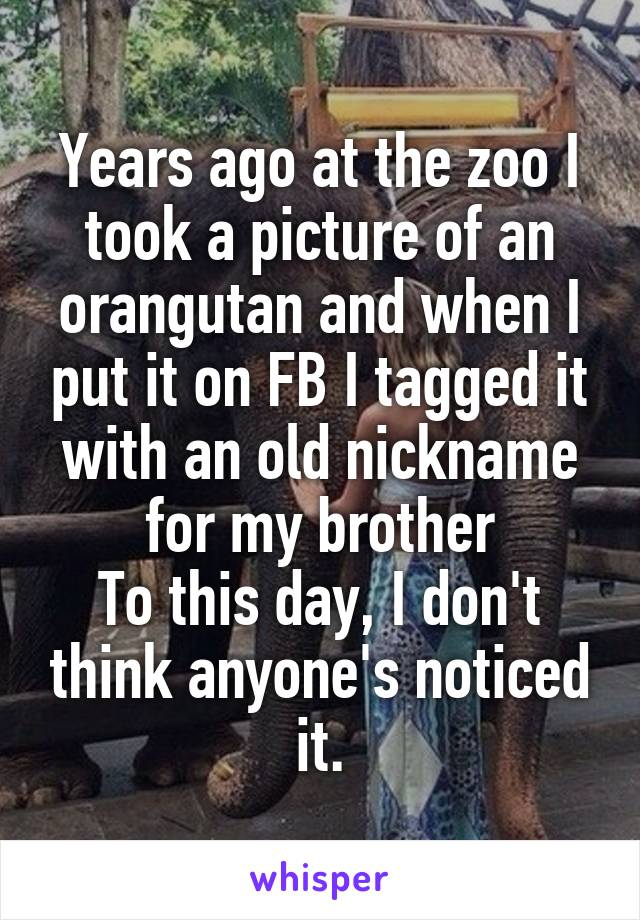 Years ago at the zoo I took a picture of an orangutan and when I put it on FB I tagged it with an old nickname for my brother To this day, I don't think anyone's noticed it.
