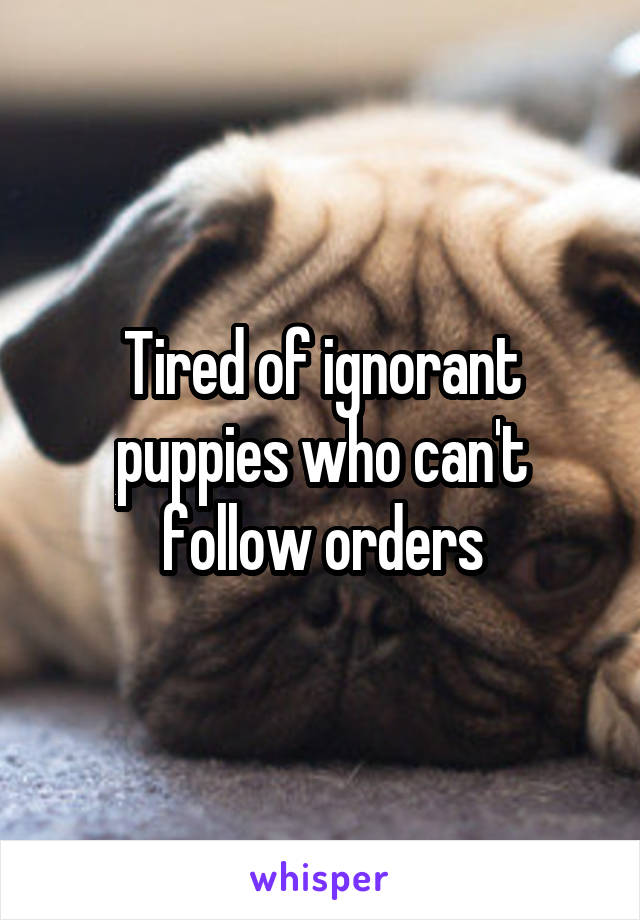 Tired of ignorant puppies who can't follow orders