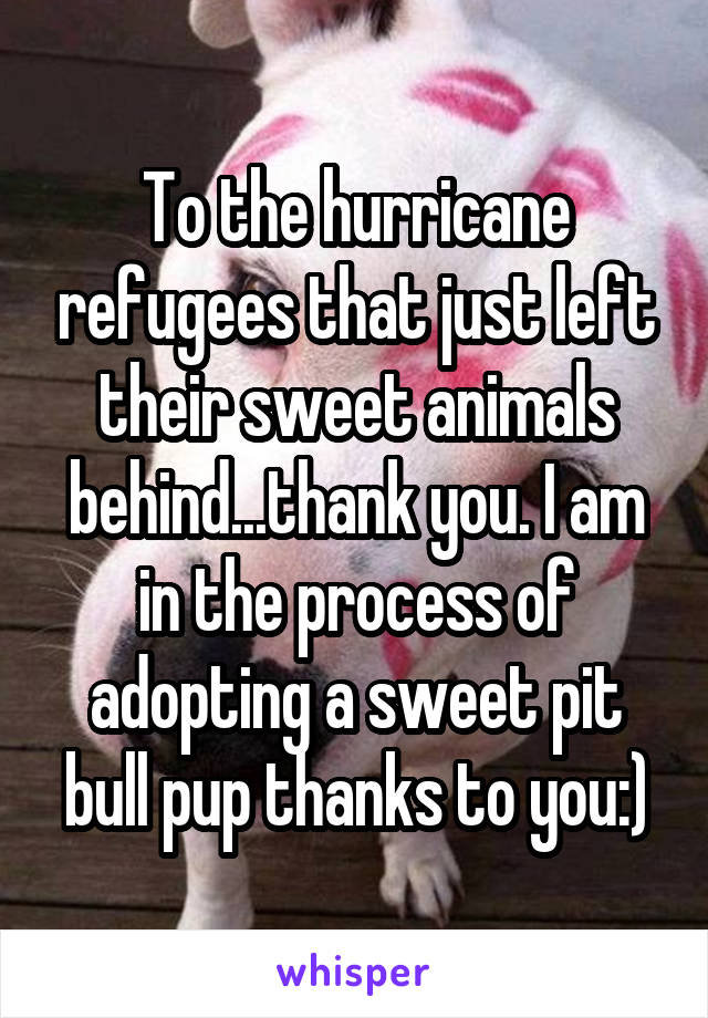 To the hurricane refugees that just left their sweet animals behind...thank you. I am in the process of adopting a sweet pit bull pup thanks to you:)