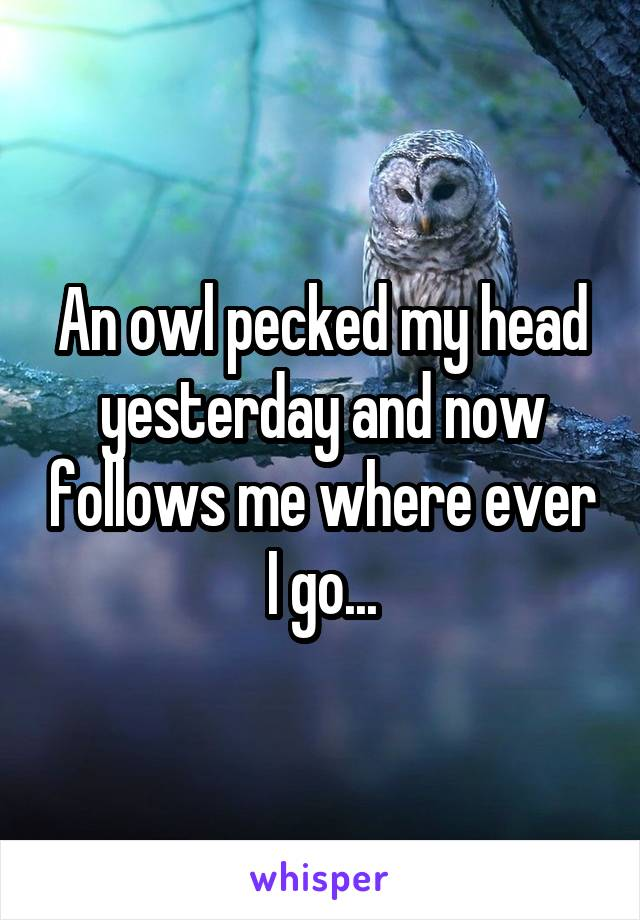 An owl pecked my head yesterday and now follows me where ever I go...