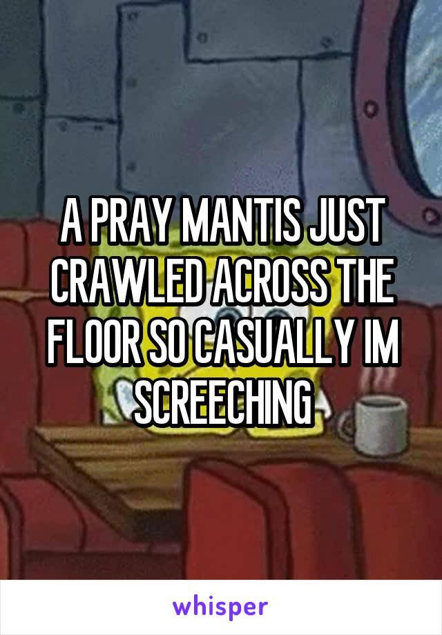 A PRAY MANTIS JUST CRAWLED ACROSS THE FLOOR SO CASUALLY IM SCREECHING
