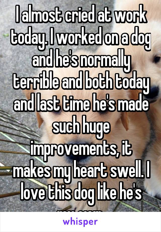 I almost cried at work today. I worked on a dog and he's normally terrible and both today and last time he's made such huge improvements, it makes my heart swell. I love this dog like he's my own.