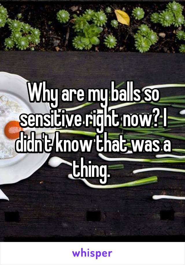Why are my balls so sensitive right now? I didn't know that was a thing.