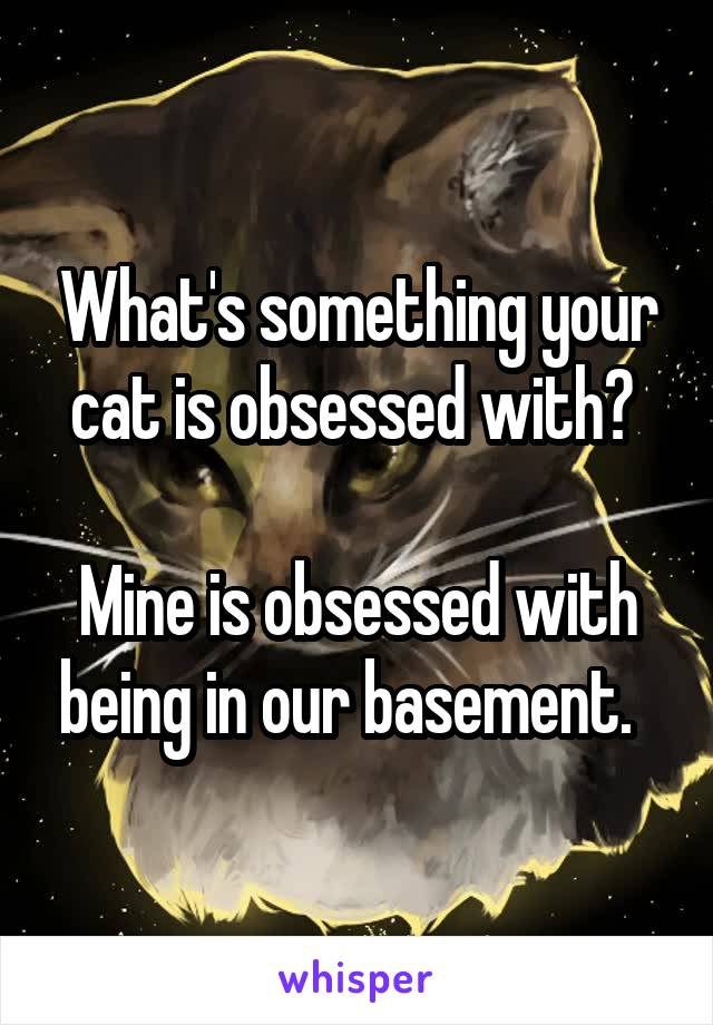 What's something your cat is obsessed with?   Mine is obsessed with being in our basement.