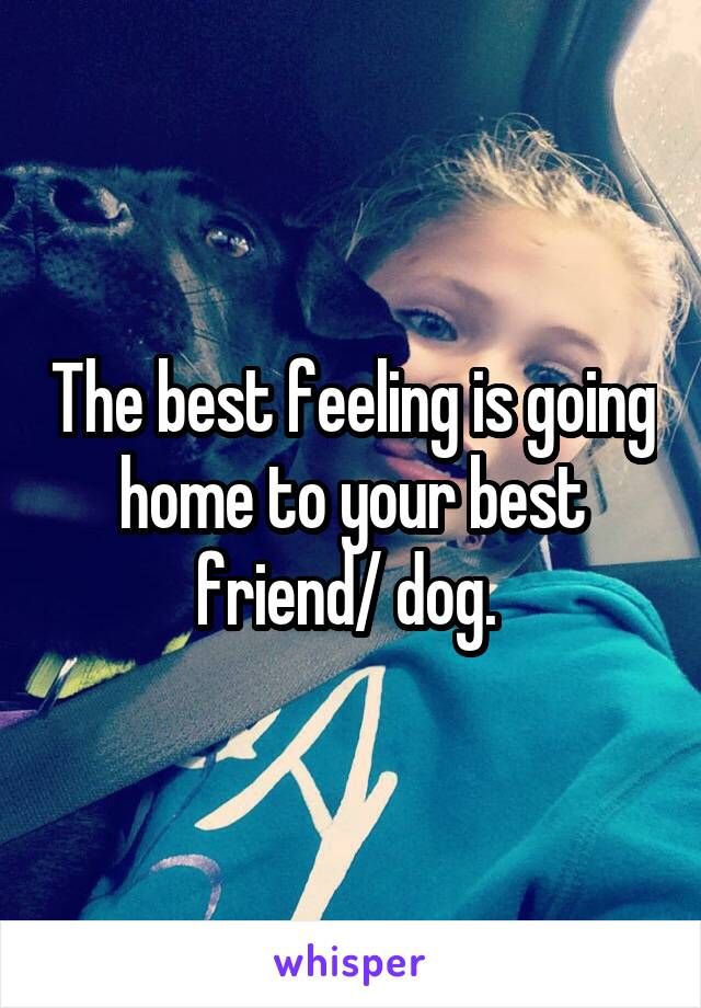 The best feeling is going home to your best friend/ dog.