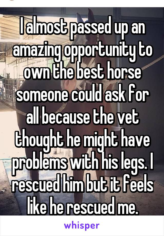 I almost passed up an amazing opportunity to own the best horse someone could ask for all because the vet thought he might have problems with his legs. I rescued him but it feels like he rescued me.