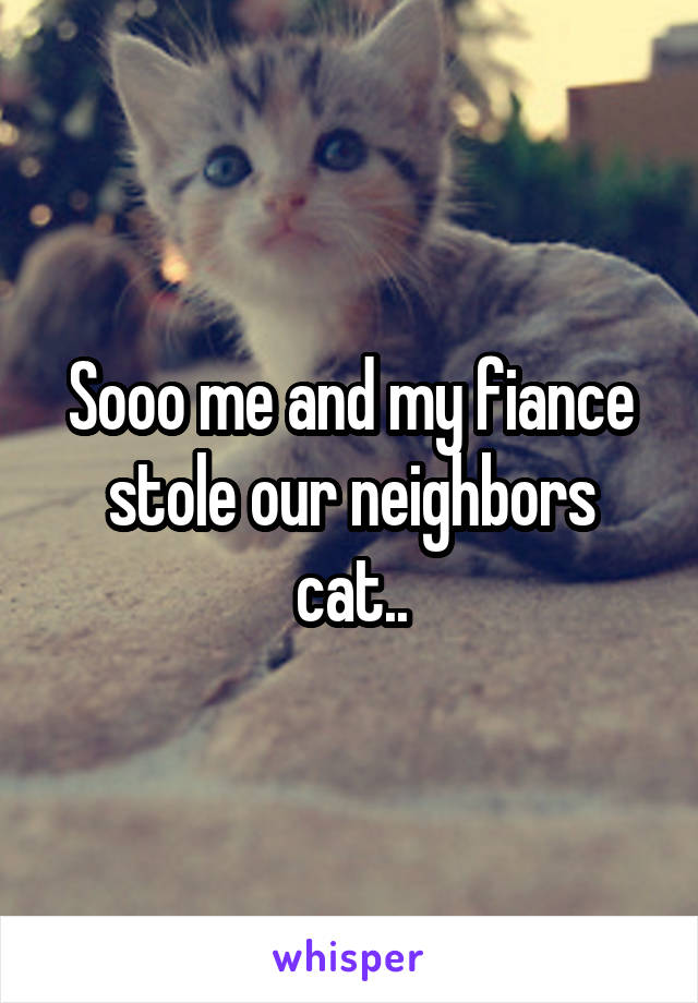 Sooo me and my fiance stole our neighbors cat..