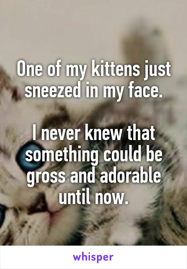 One of my kittens just sneezed in my face.  I never knew that something could be gross and adorable until now.