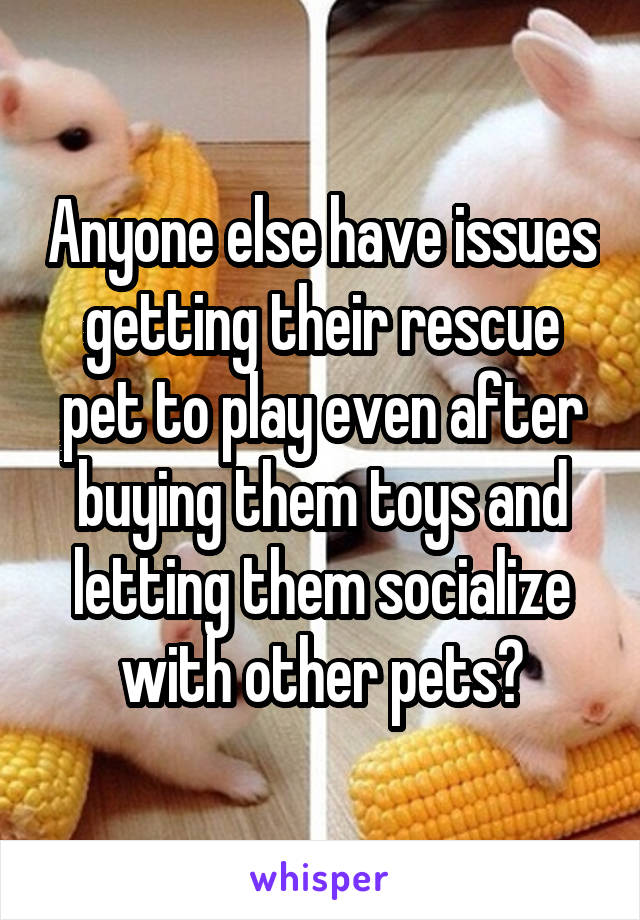 Anyone else have issues getting their rescue pet to play even after buying them toys and letting them socialize with other pets?