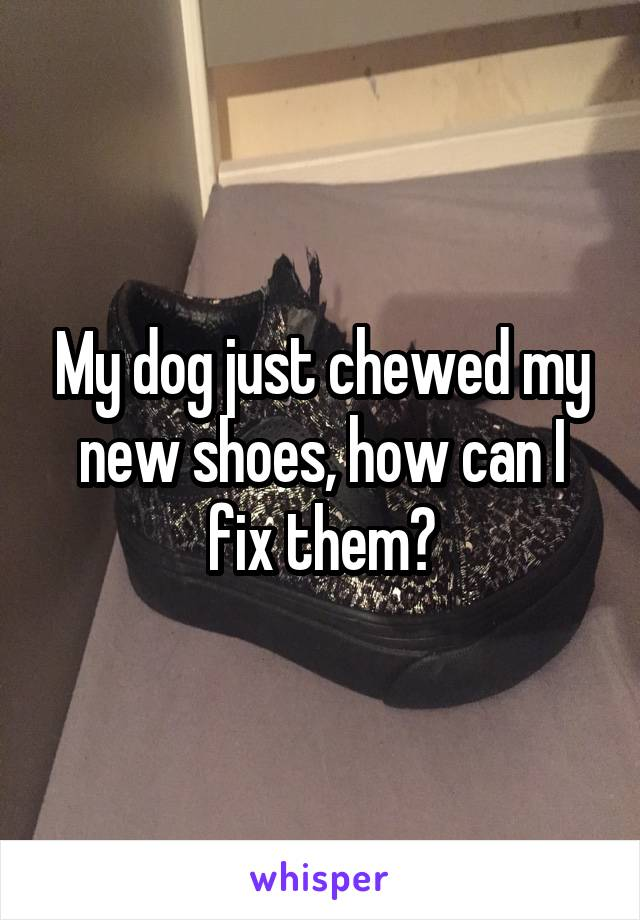 My dog just chewed my new shoes, how can I fix them?
