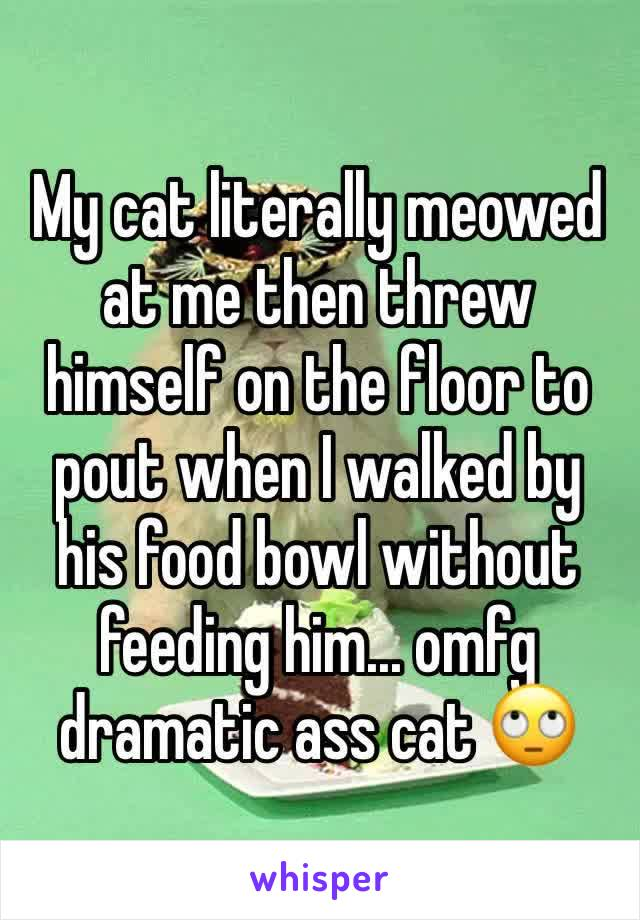 My cat literally meowed at me then threw himself on the floor to pout when I walked by his food bowl without feeding him... omfg dramatic ass cat 🙄
