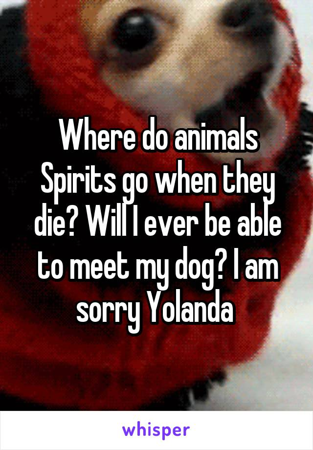 Where do animals Spirits go when they die? Will I ever be able to meet my dog? I am sorry Yolanda