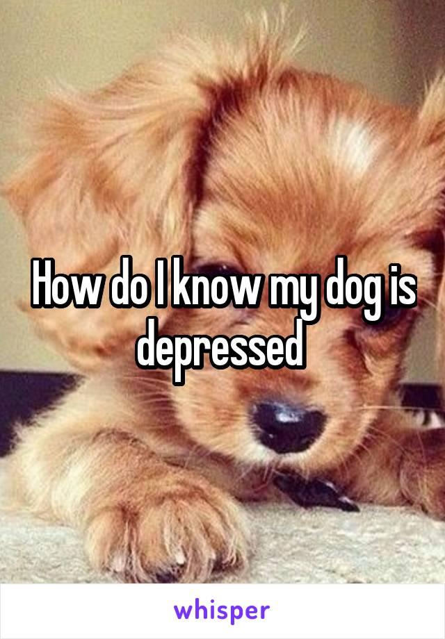 How do I know my dog is depressed