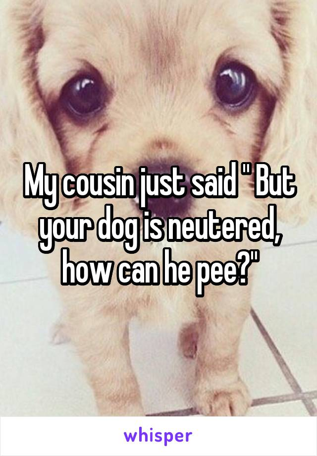 "My cousin just said "" But your dog is neutered, how can he pee?"""