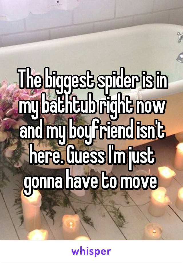 The biggest spider is in my bathtub right now and my boyfriend isn't here. Guess I'm just gonna have to move