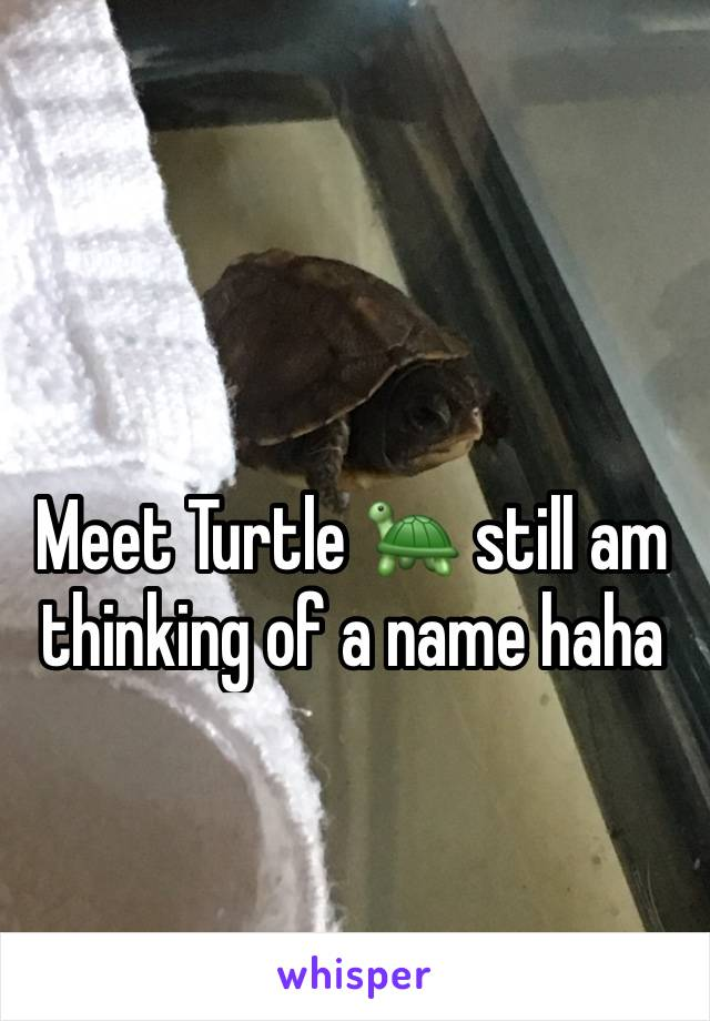 Meet Turtle 🐢 still am thinking of a name haha