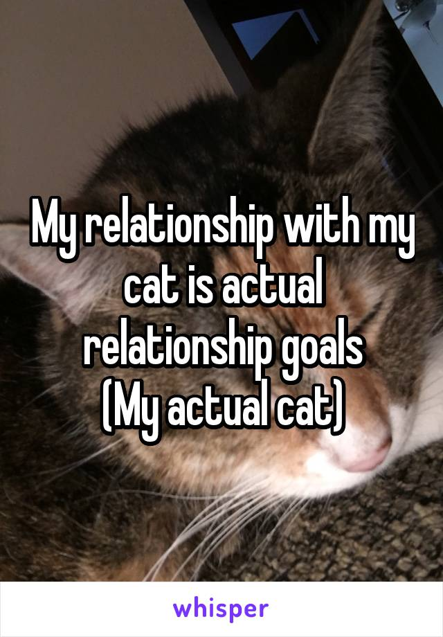 My relationship with my cat is actual relationship goals (My actual cat)