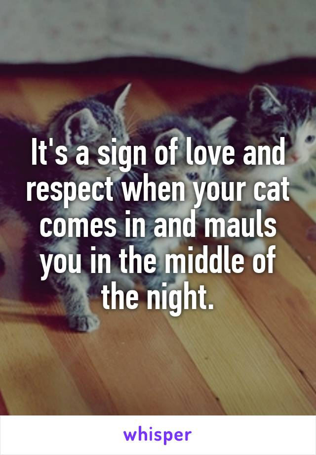 It's a sign of love and respect when your cat comes in and mauls you in the middle of the night.