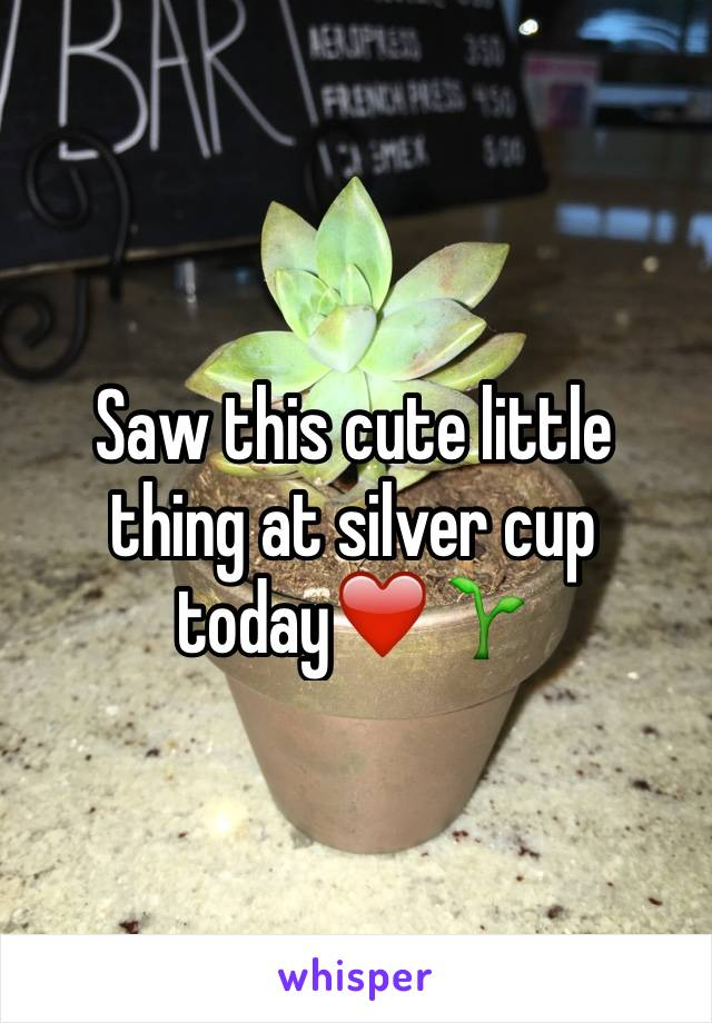 Saw this cute little thing at silver cup today❤️🌱