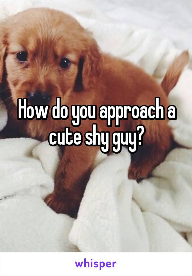 How do you approach a cute shy guy?
