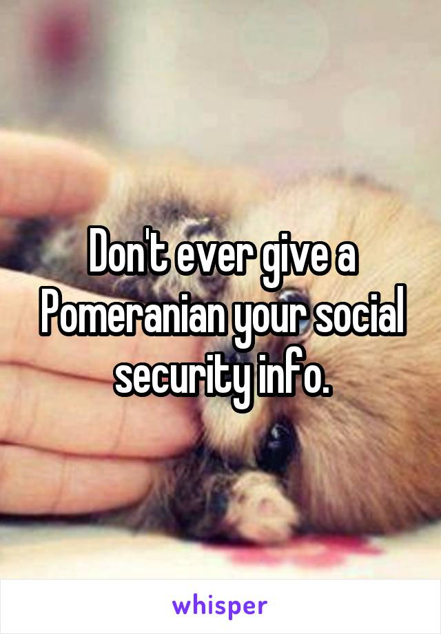 Don't ever give a Pomeranian your social security info.