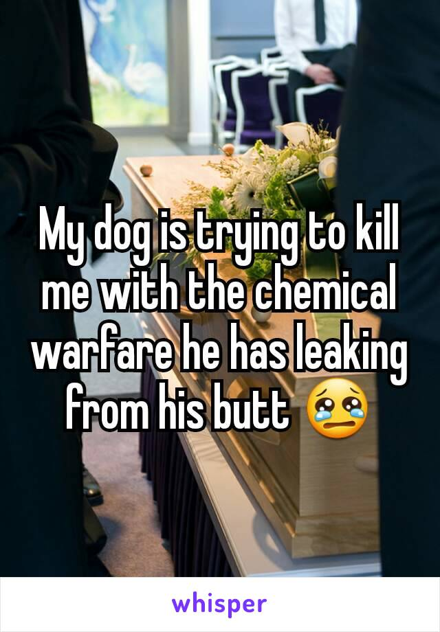 My dog is trying to kill me with the chemical warfare he has leaking from his butt 😢