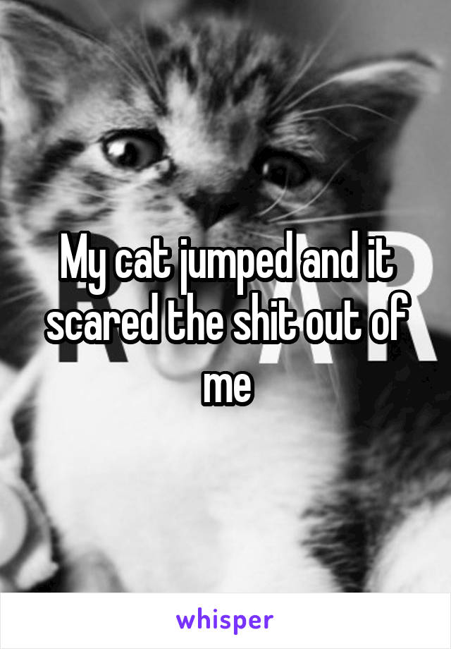 My cat jumped and it scared the shit out of me