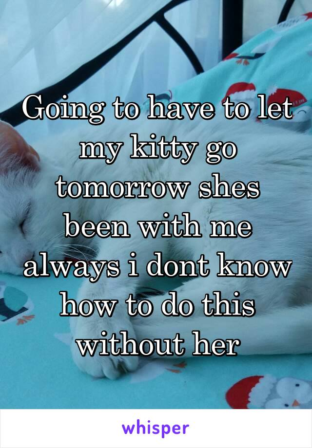 Going to have to let my kitty go tomorrow shes been with me always i dont know how to do this without her