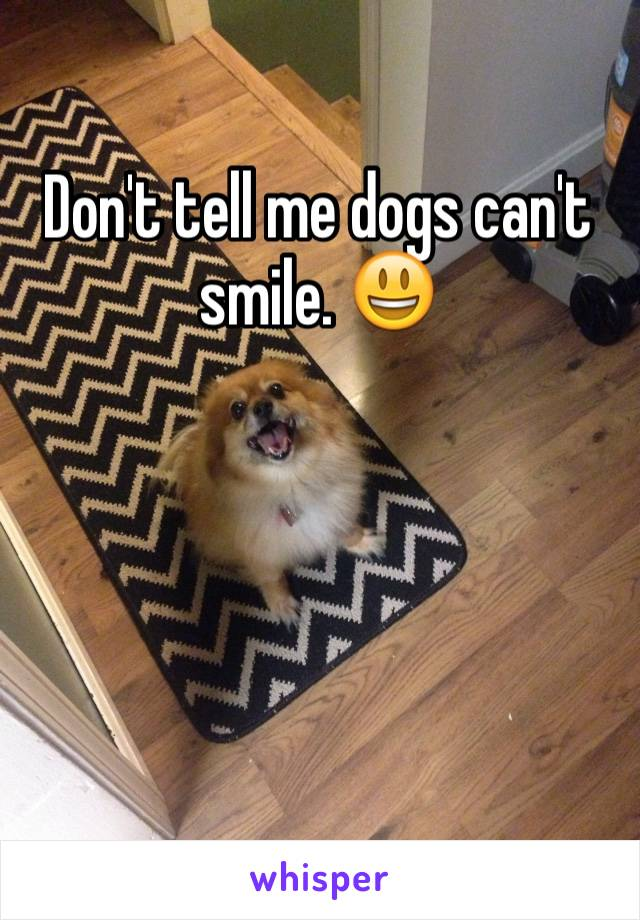 Don't tell me dogs can't smile. 😃