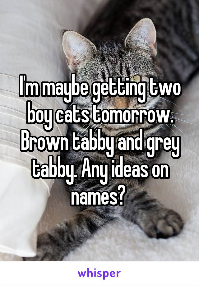 I'm maybe getting two boy cats tomorrow. Brown tabby and grey tabby. Any ideas on names?