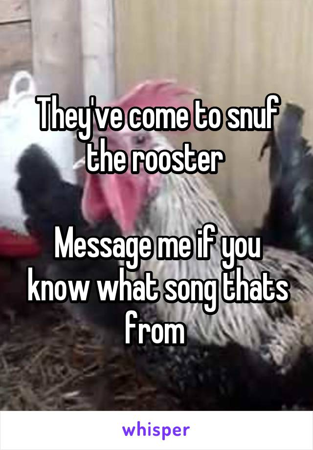 They've come to snuf the rooster   Message me if you know what song thats from
