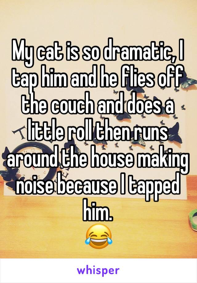 My cat is so dramatic, I tap him and he flies off the couch and does a little roll then runs around the house making noise because I tapped him. 😂