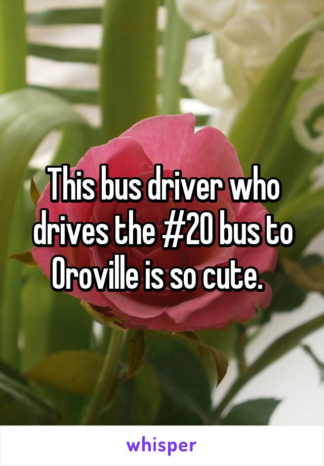 This bus driver who drives the #20 bus to Oroville is so cute.