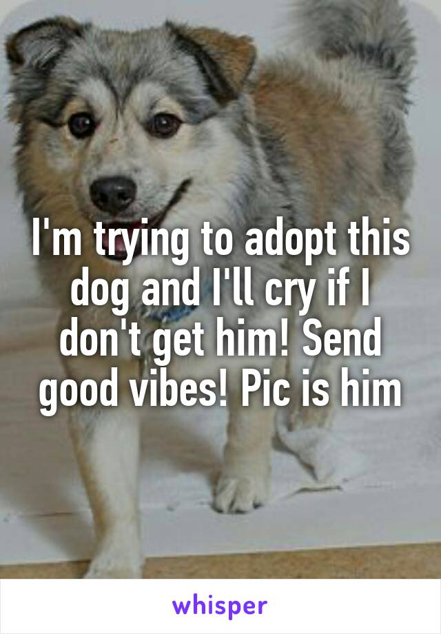 I'm trying to adopt this dog and I'll cry if I don't get him! Send good vibes! Pic is him