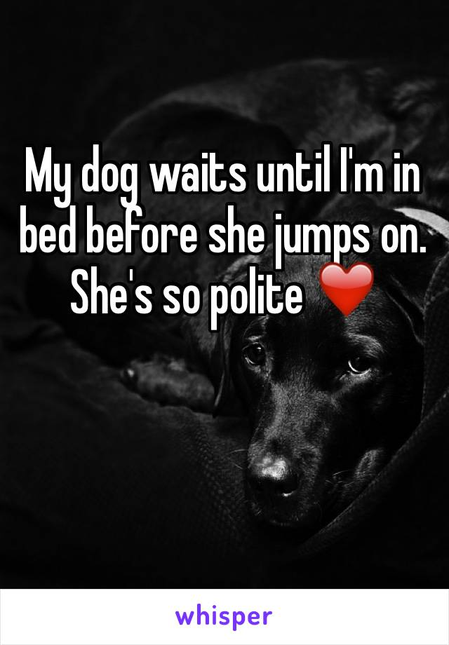 My dog waits until I'm in bed before she jumps on. She's so polite ❤️