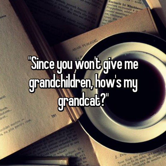 """Since you won't give me grandchildren, how's my grandcat?"""