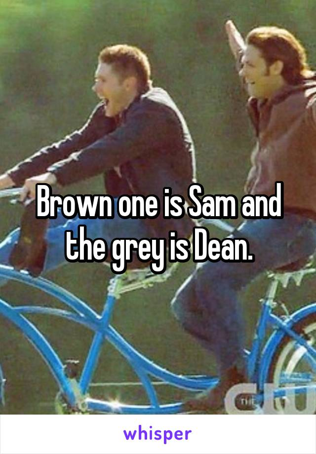 Brown one is Sam and the grey is Dean.