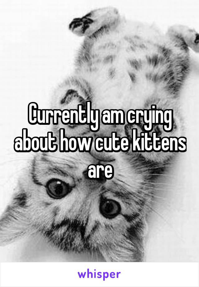 Currently am crying about how cute kittens are