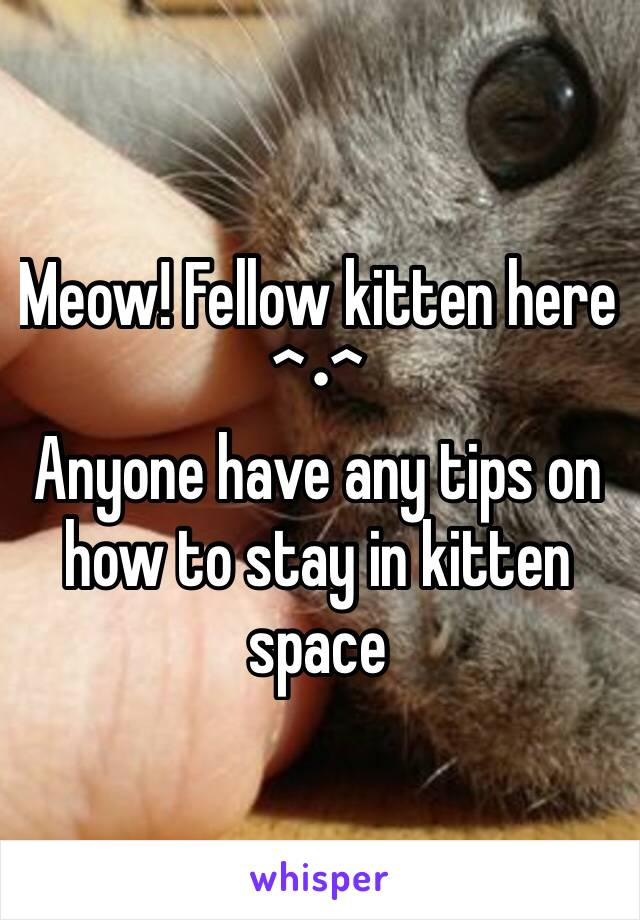 Meow! Fellow kitten here ^•^  Anyone have any tips on how to stay in kitten space
