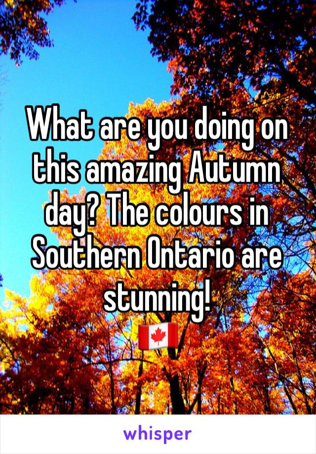 What are you doing on this amazing Autumn day? The colours in Southern Ontario are stunning!  🇨🇦