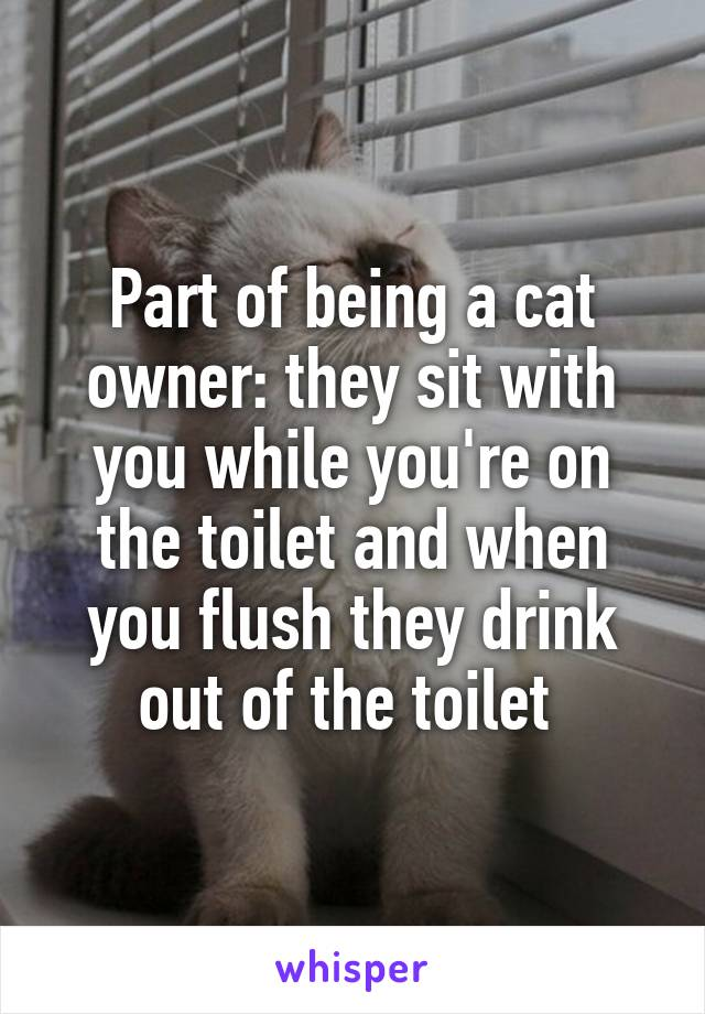 Part of being a cat owner: they sit with you while you're on the toilet and when you flush they drink out of the toilet