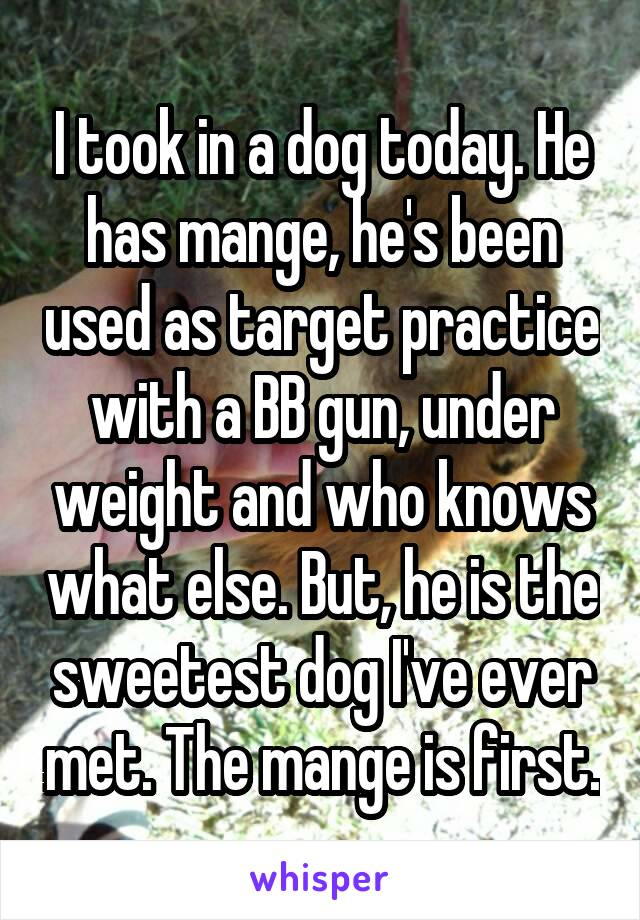 I took in a dog today. He has mange, he's been used as target practice with a BB gun, under weight and who knows what else. But, he is the sweetest dog I've ever met. The mange is first.