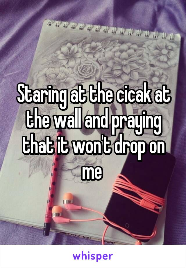 Staring at the cicak at the wall and praying that it won't drop on me