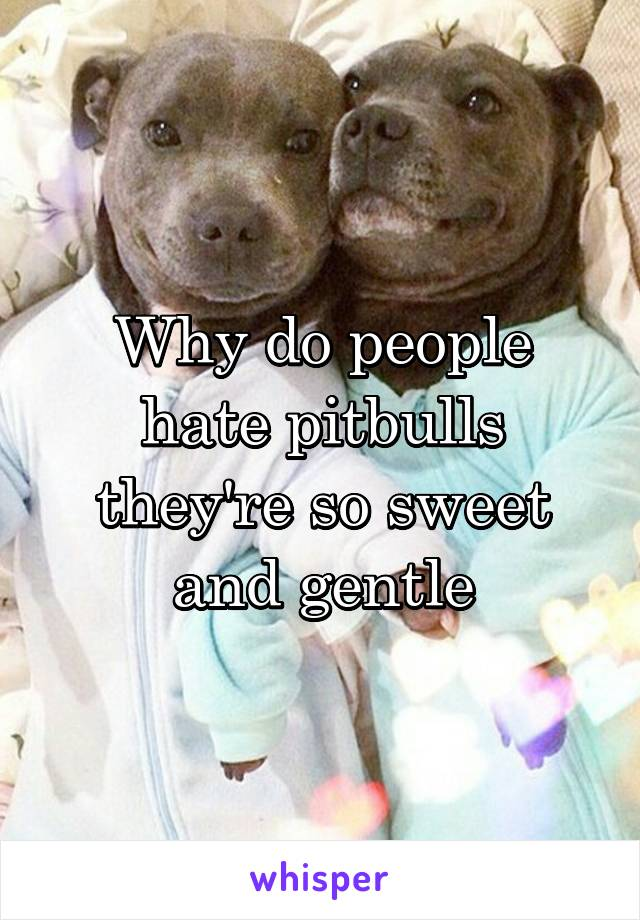 Why do people hate pitbulls they're so sweet and gentle